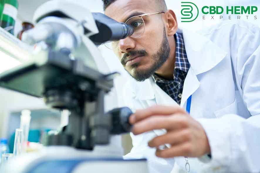 CBD Hemp Experts Press Release