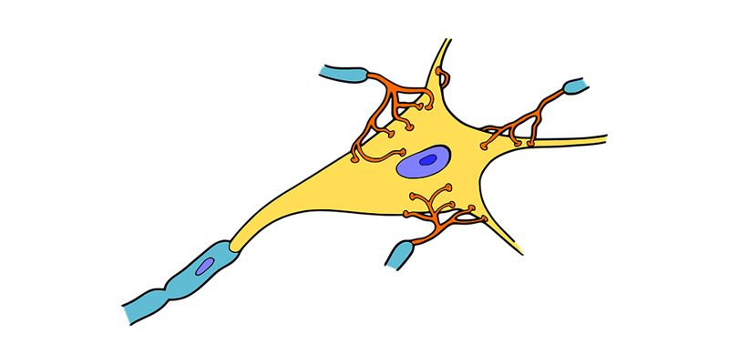 nervous system and neuropathy in type 2 diabetes