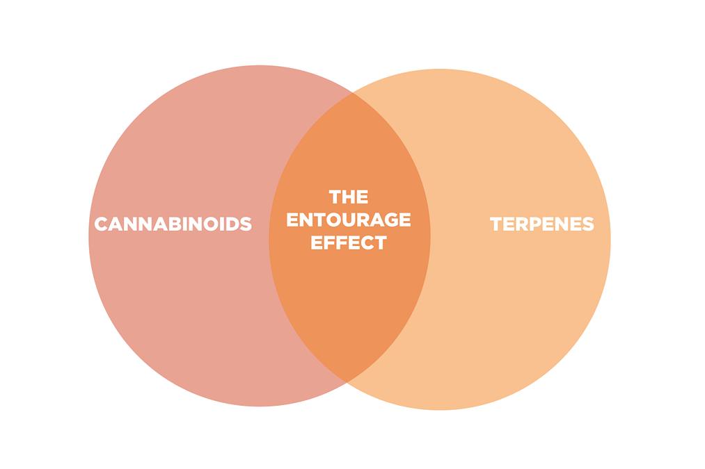 the entourage effect
